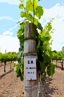 Luna Wente Vineyard Sign